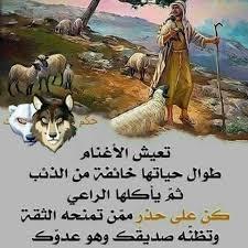 Image result for ?تعیش الأَغنام طول حیاتها خائفة من الذئاب?